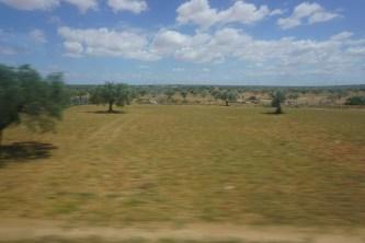 Olivenbäume –so weit das Auge reicht.
