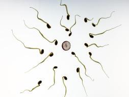 Cómo interpretar un Espermiograma: Vitalidad y Morfología