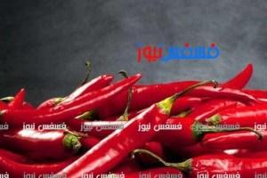السعودية تحظر استيراد الفلفل المصري بجميع أنواعه