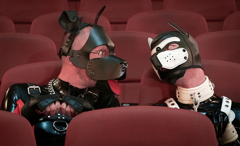 Pups in Cinema - Copyright 2021, fesselblog.de