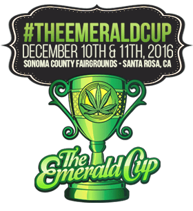 Emerald Cup's Latest Roll: Enlightening the Perspective on the Flower Blossoming Industry