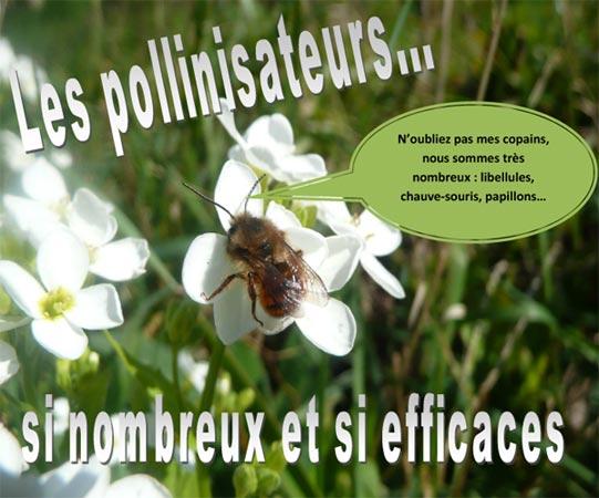 Concours photo Géodomia 2014 : Les pollinisateurs