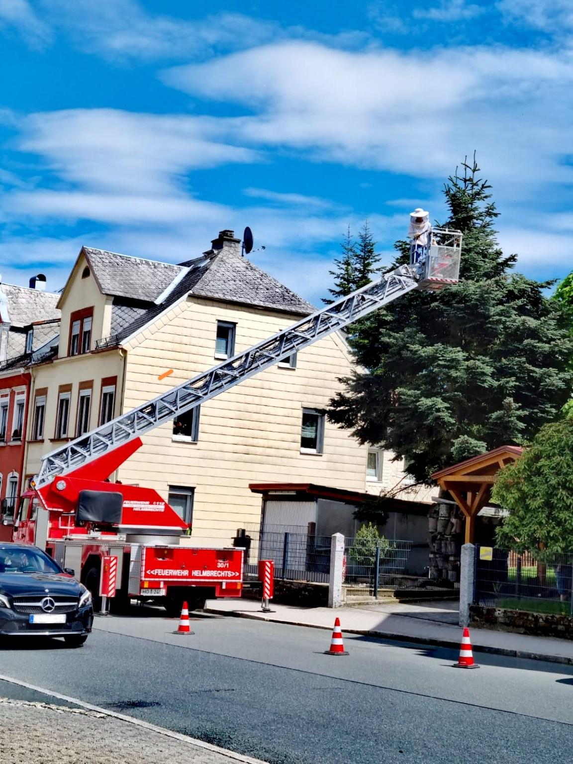 Insekten (Gefahr für Personen) - Freiwillige Feuerwehr