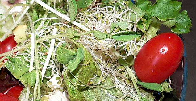 graines-germées-feuille-de-choux