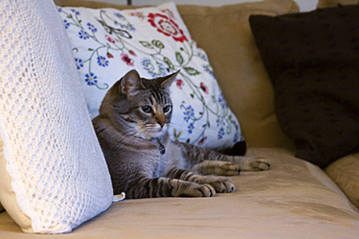 roux-sofa-nao_2S.jpg