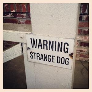 warningdog.jpg