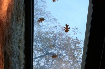 fall_leaves_quintessa.jpg