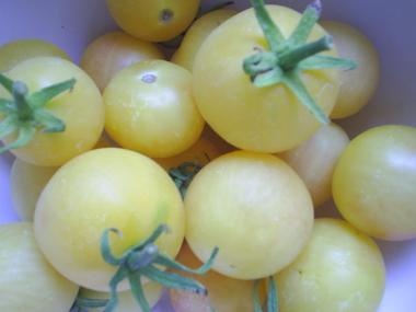 yellowtomatoes.JPG