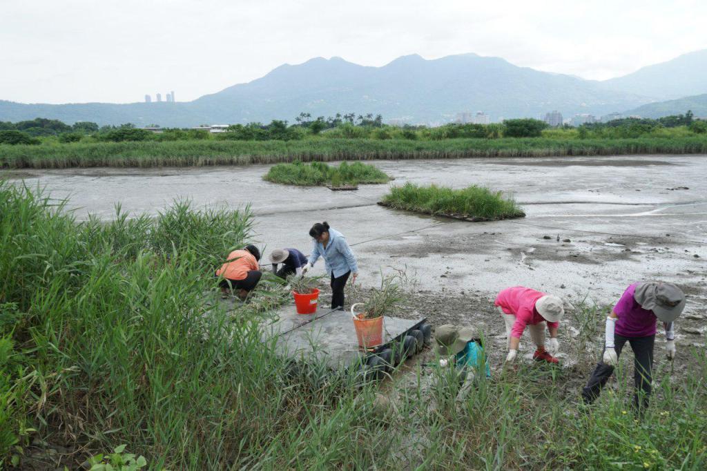 志工們參與棲地維護
