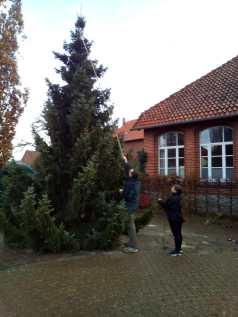 Weihnachtsbaum Schliekum