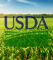 USDA Weekly Dry Bean Prices
