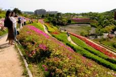 Hayama, Shonan Village. Un très joli parterre de fleurs colorées