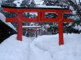 Quelques torii