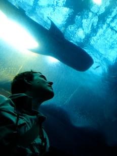 ... et aux requins
