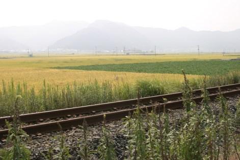 Arret bucolique le long du chemin de fer.