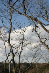 Branches (2)