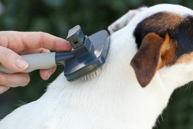 brushing dog hairs