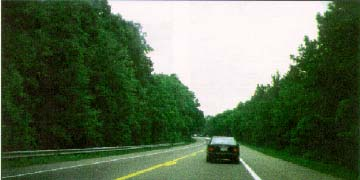 Photo: Rt. 197, MD showing two lane, tree lined road with wide shoulders and no sidewalks