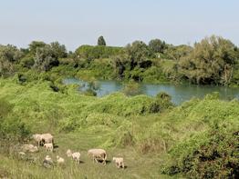 Photo of domenica 12 gennaio: Codevigo-Chioggia, tra Brenta e Bacchiglione