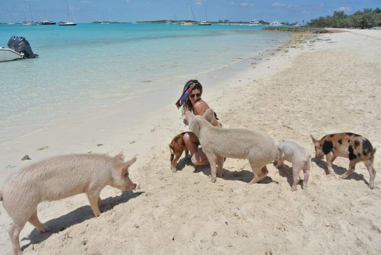 exuma-pigs-island-bahamas
