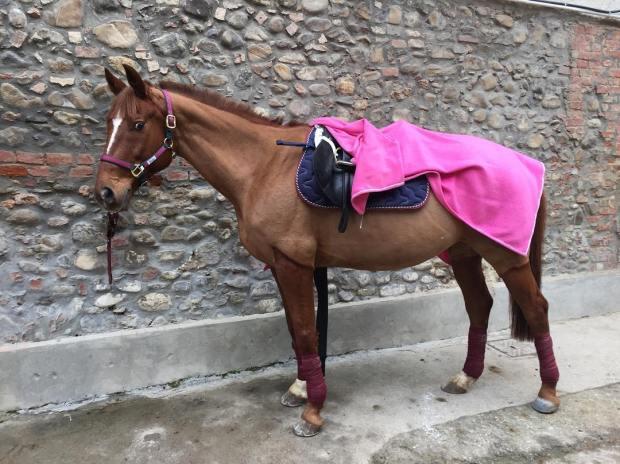 Ma quanto sei bello? Sei la nostra gioia, il nostro sogno. @matteo_basile92 www.fiammettamerlo.com #horses #horse #horsesofinstagram #TagsForLikes #horseshow #horseshoe #horses_of_instagram #horsestagram #instahorses #wild #mane #instagood #grass #field #farm #nature #pony #ponies #ilovemyhorse #babyhorse #beautiful #pretty #photooftheday #gallop #jockey #rider #riders #riding