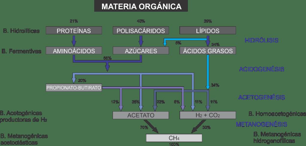 Etapas de digestión anaerobia. (Gonzalez F, et al, tratamiento de aguas residuales, 2012)