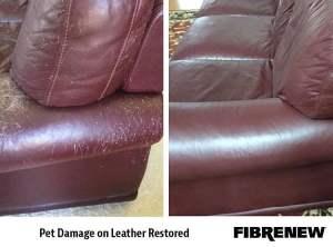 Pet Damage on Leather Sofa Restored
