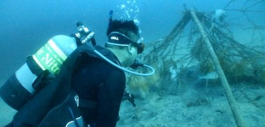 水深20mで涼をとる