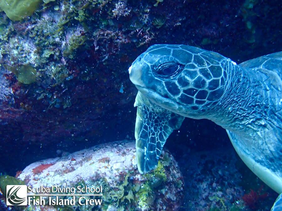 20180617王の浜ウミガメ