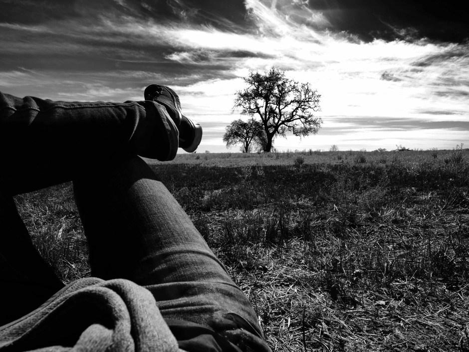 Paula Park's Tree Photography