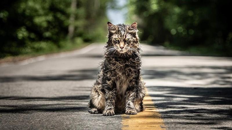 Stephen King's New Pet Sematary Movie - a Story About Devastating Loss