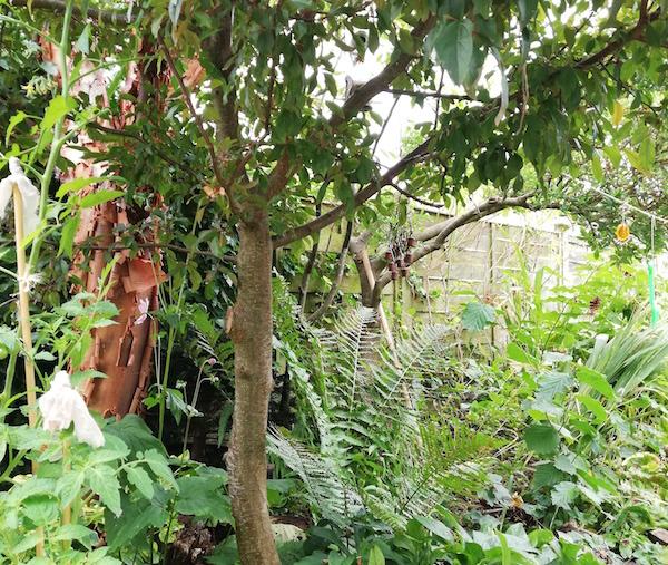 My food forest garden (September 2021)