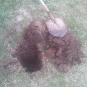 cu ajutorul unei cazmale am sapat groapa pentru plantat pomul