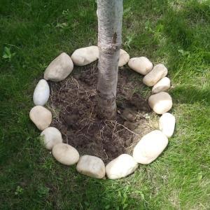 Pietrele din gramada de pietris de constructii au fost asezate in cerc, pentru a decora baza