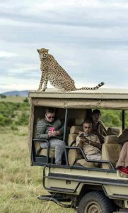 cheetah-4-of-4