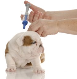 Puppy shots are not optional, they're essential..... but you don't ...