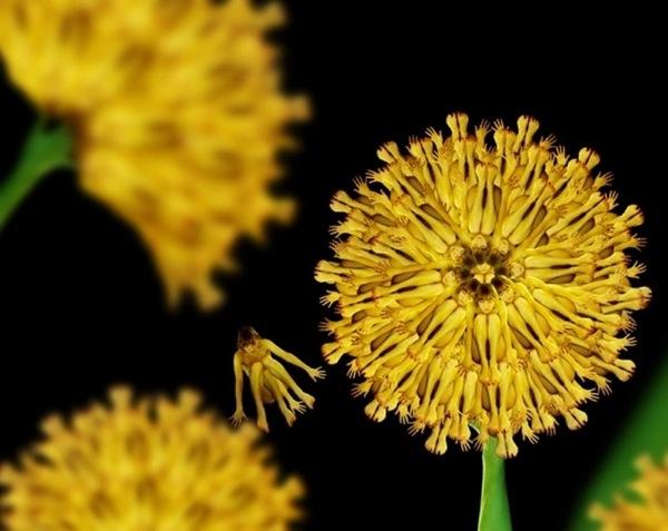 cecelia-webber-