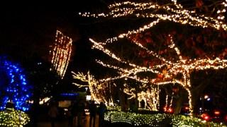 Romantic Nights With Renge-ji Pond Illuminations