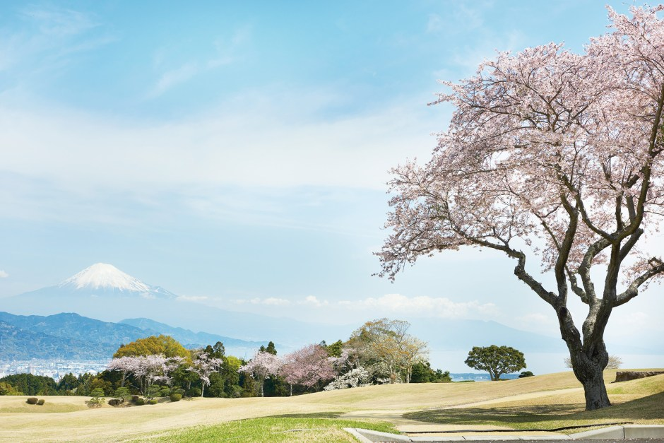 【Shizuoka Sakura Map 17】''Nihondaira Plain'' A view capturing the essence of Japan, throughout all four seasons.