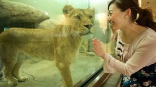 Wild-life Animals In Shizuoka-city; Nippon-daira Zoo