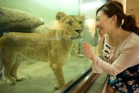 静岡市立日本平動物園/Shizuoka Nippon-daira Zoo