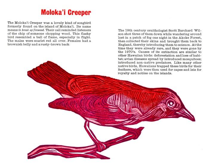 molokai creeper_spread