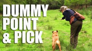 Gundog Summer Boot Camp: Dummy Point & Pick