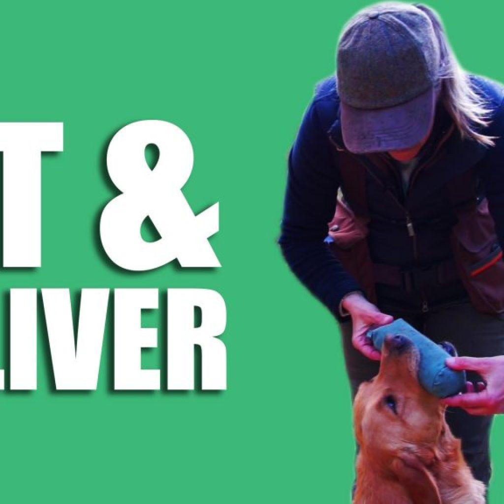Gundog Summer Boot Camp: Sit and Deliver