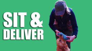 Gundog Summer Boot Camp: Sit and Deliver