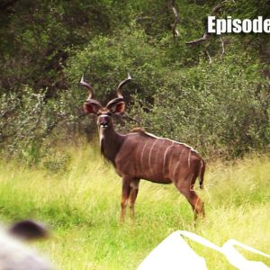 Hunting Kudu – Fieldsports Africa, episode 8