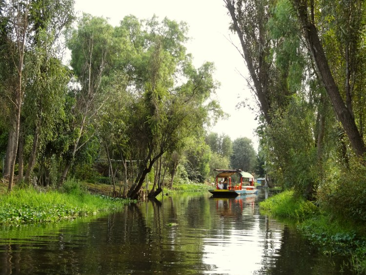 Boat in Xochimilco between chinampas