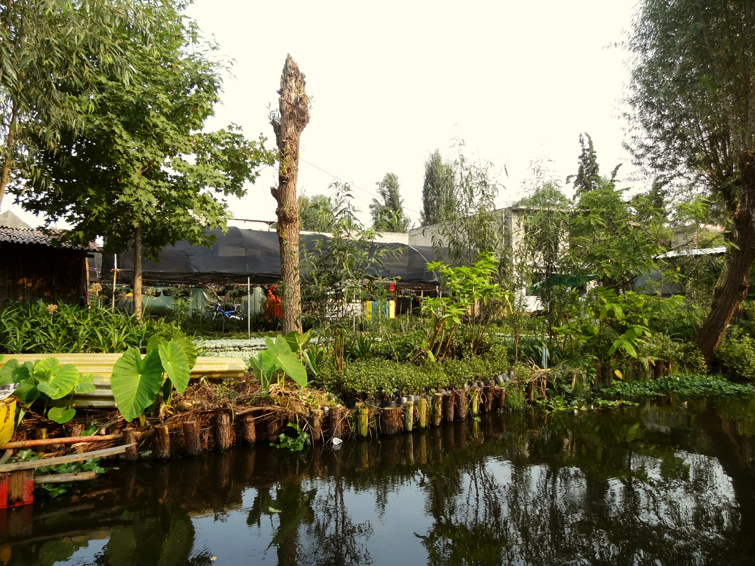 Chinampas The Floating Gardens Of A Sinking City Field Study Of The World