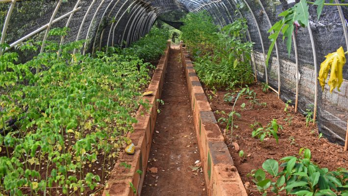 Sadhana Forest and improving food security through reforestation in Haiti