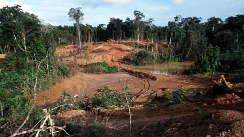 deforestation-or-illegal